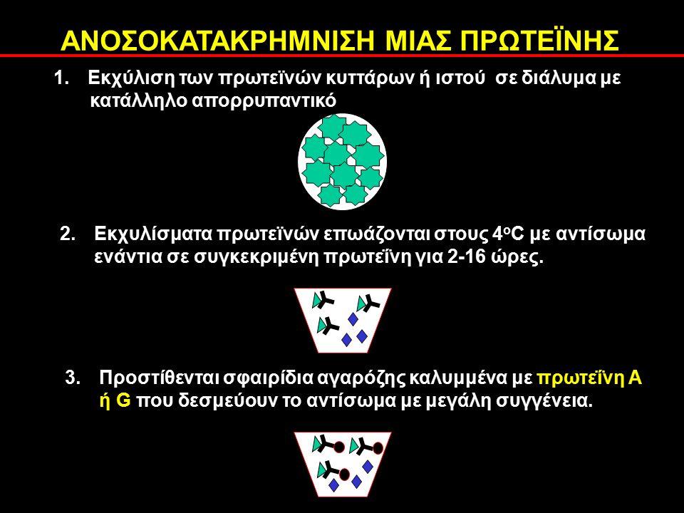 1.Εκχύλιση των πρωτεϊνών κυττάρων ή ιστού σε διάλυμα με κατάλληλο απορρυπαντικό 2.Εκχυλίσματα πρωτεϊνών επωάζονται στους 4 ο C με αντίσωμα ενάντια σε συγκεκριμένη πρωτεΐνη για 2-16 ώρες.