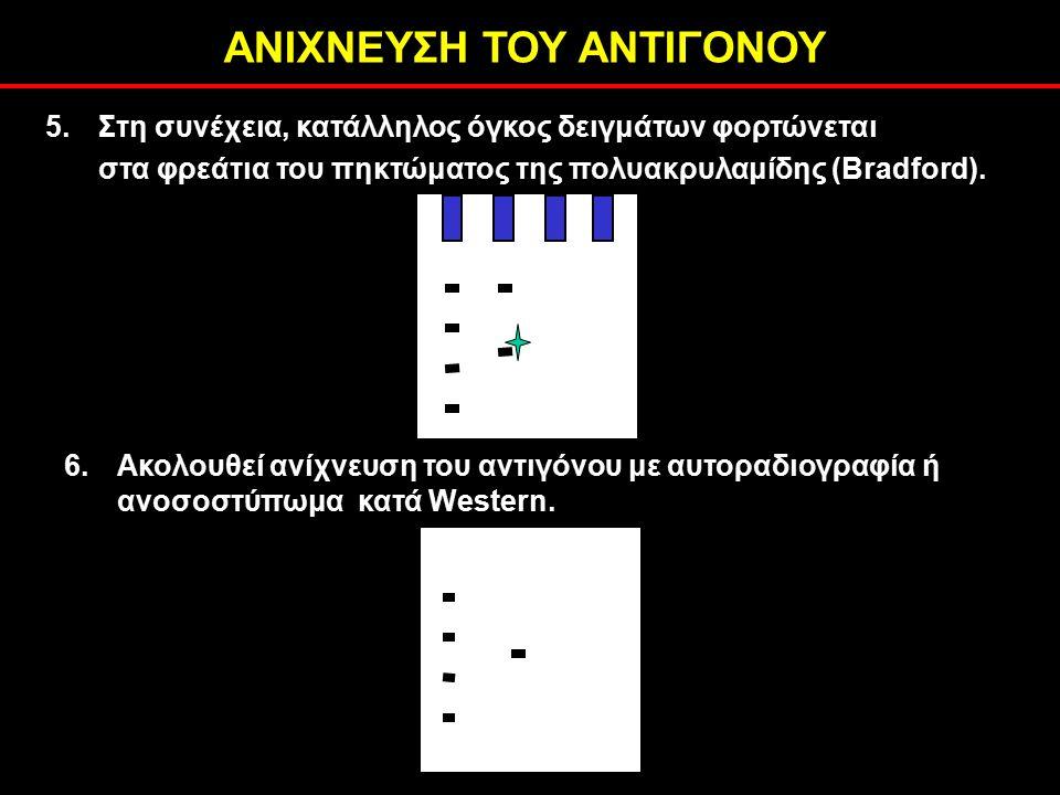 ΑΝΙΧΝΕΥΣΗ ΤΟΥ ΑΝΤΙΓΟΝΟΥ 6.Ακολουθεί ανίχνευση του αντιγόνου με αυτοραδιογραφία ή ανοσοστύπωμα κατά Western.