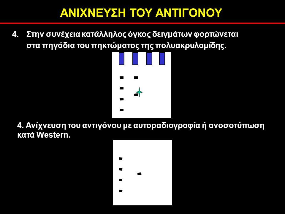 ΑΝΙΧΝΕΥΣΗ ΤΟΥ ΑΝΤΙΓΟΝΟΥ 4. Ανίχνευση του αντιγόνου με αυτοραδιογραφία ή ανοσοτύπωση κατά Western.