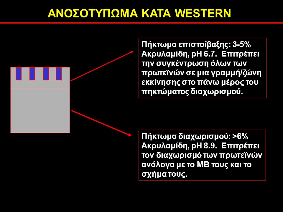 ΑΝΟΣΟΤΥΠΩΜΑ ΚΑΤΑ WESTERN Πήκτωμα επιστοίβαξης: 3-5% Ακρυλαμίδη, pH 6.7.