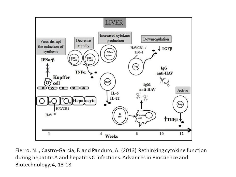 Χρόνια Ηπατίτιδα Ε Χρόνια ηπατίτιδα – κίρρωση: HEV-3 Σε ανοσοκατεσταλμένους: μεταμόσχευση συμπαγών οργάνων (SOT), ΗIV + και ασθενείς με αιματολογικά νοσήματα Διάγνωση: + HEV RNA ≥ 3-6 μήνες Σε SOT 0.9 to 3.5% στην Ευρώπη Στην πλειονότητα ασυμπτωματικοί.