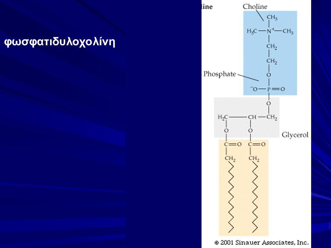 φωσφατιδυλοχολίνη