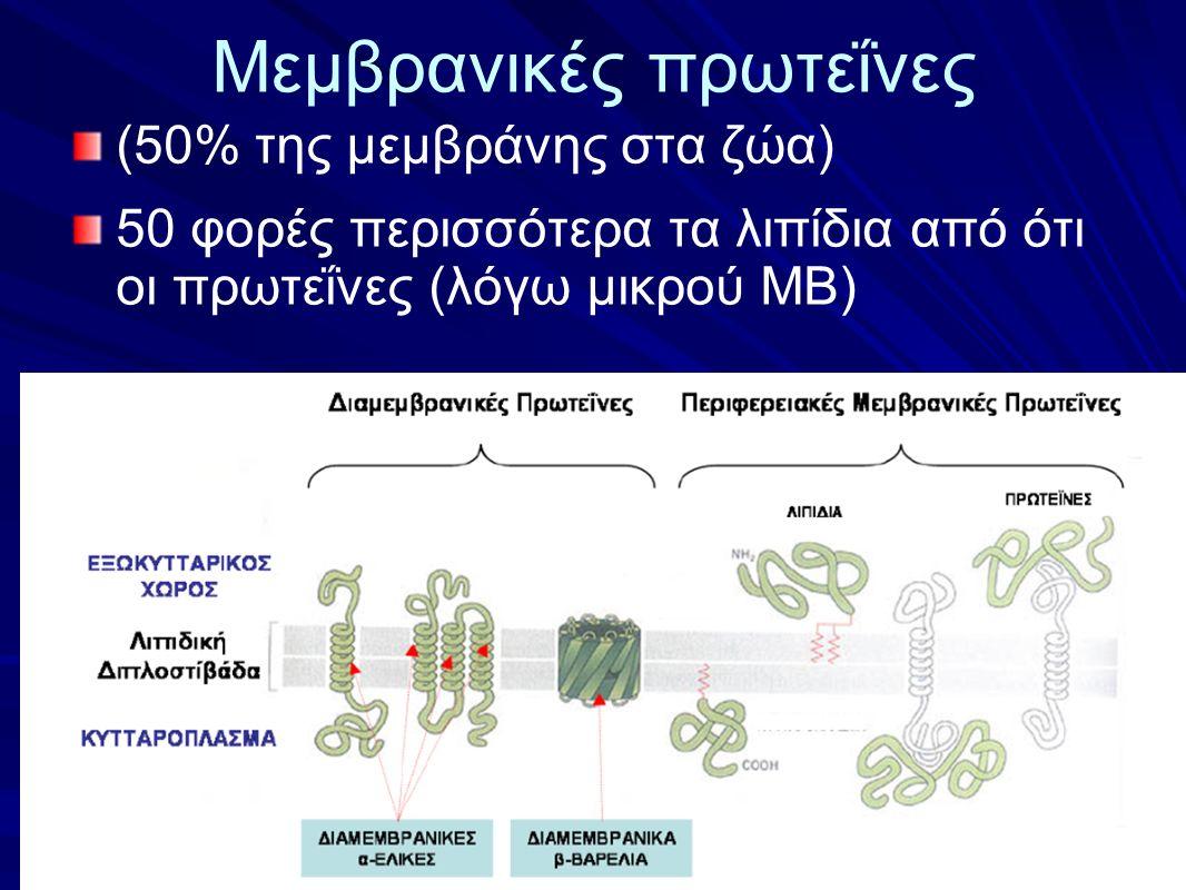 Μεμβρανικές πρωτεΐνες (50% της μεμβράνης στα ζώα) 50 φορές περισσότερα τα λιπίδια από ότι οι πρωτεΐνες (λόγω μικρού ΜΒ)