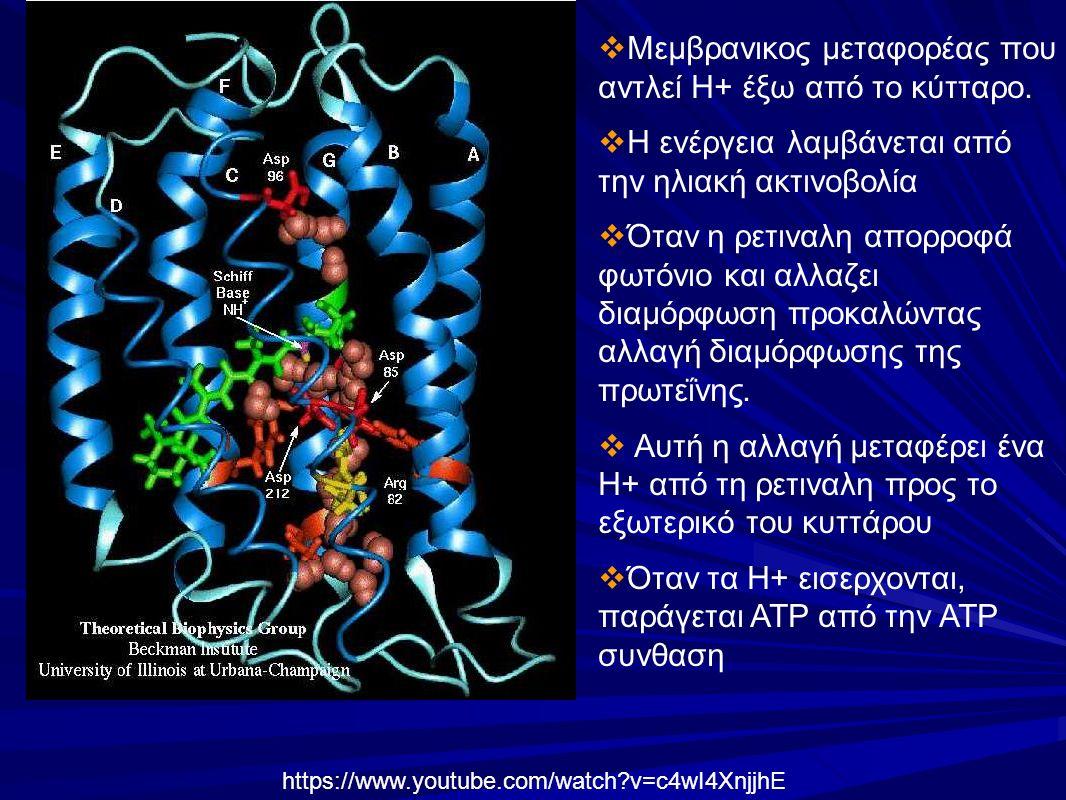 https://www.youtube.com/watch v=c4wI4XnjjhE  Μεμβρανικος μεταφορέας που αντλεί Η+ έξω από το κύτταρο.