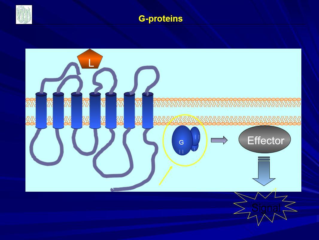 GG   L Effector G-proteins Signal