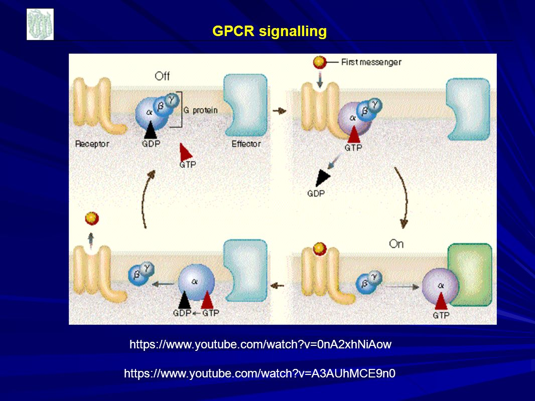 GPCR signalling https://www.youtube.com/watch v=0nA2xhNiAow https://www.youtube.com/watch v=A3AUhMCE9n0