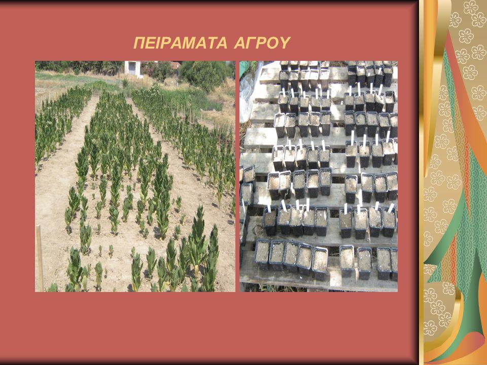 ΕΡΓΑΣΤΗΡΙΑΚΑ ΠΕΙΡΑΜΑΤΑ Στα εργαστηριακά πειράματα συνήθως γίνεται σύγκριση των χαρακτηριστικών των σπόρων (βλαστική και φυτρωτική ικανότητα) διαφόρων ποικιλιών, εδαφολογικές αναλύσεις για την εκτίμηση της καταλληλότητας της γεωργικής γης καθώς και εκχυλίσεις αιθέριων ελαίων από τα διάφορα Φαρμακευτικά και Αρωματικά Φυτά τα οποία καλλιεργούνται σε ειδικό μέρος του αγρού.