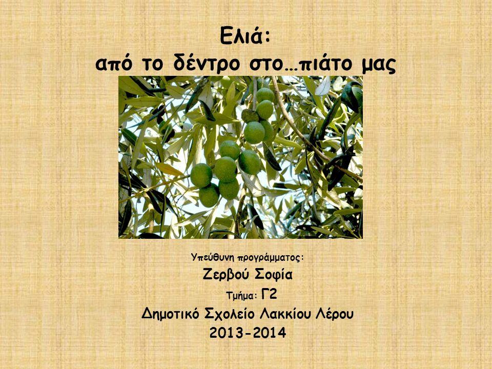 Ελιά: από το δέντρο στο…πιάτο μας Υπεύθυνη προγράμματος: Ζερβού Σοφία Τμήμα: Γ2 Δημοτικό Σχολείο Λακκίου Λέρου 2013-2014