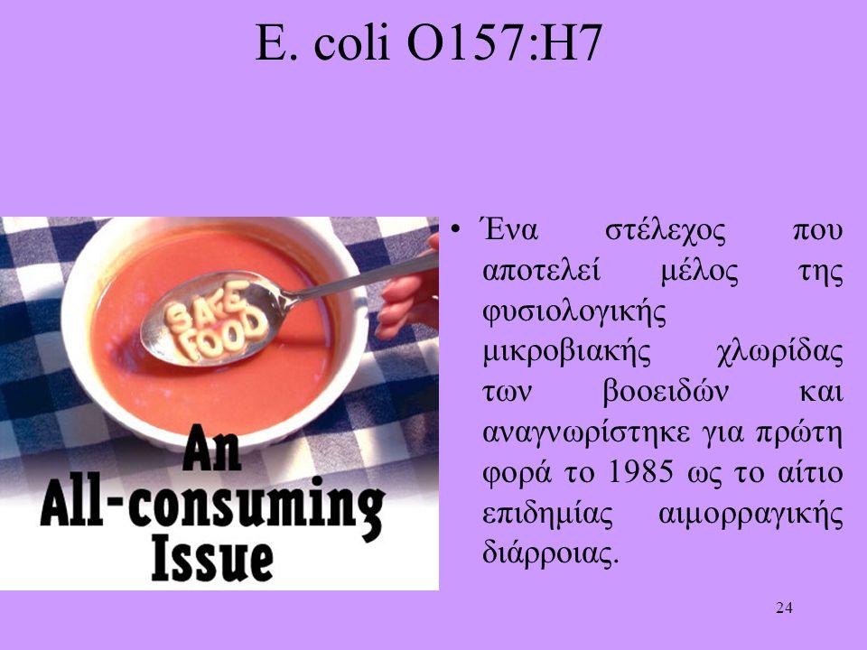24 E. coli O157:H7 Ένα στέλεχος που αποτελεί μέλος της φυσιολογικής μικροβιακής χλωρίδας των βοοειδών και αναγνωρίστηκε για πρώτη φορά το 1985 ως το α