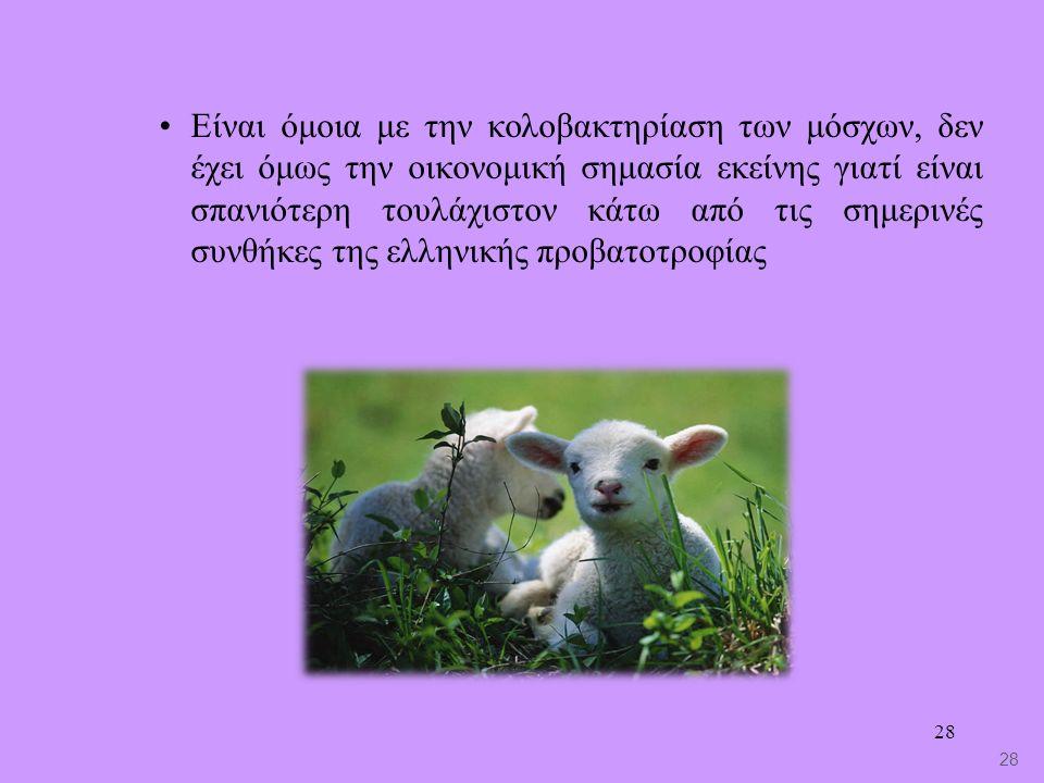 28 Είναι όμοια με την κολοβακτηρίαση των μόσχων, δεν έχει όμως την οικονομική σημασία εκείνης γιατί είναι σπανιότερη τουλάχιστον κάτω από τις σημερινές συνθήκες της ελληνικής προβατοτροφίας 28
