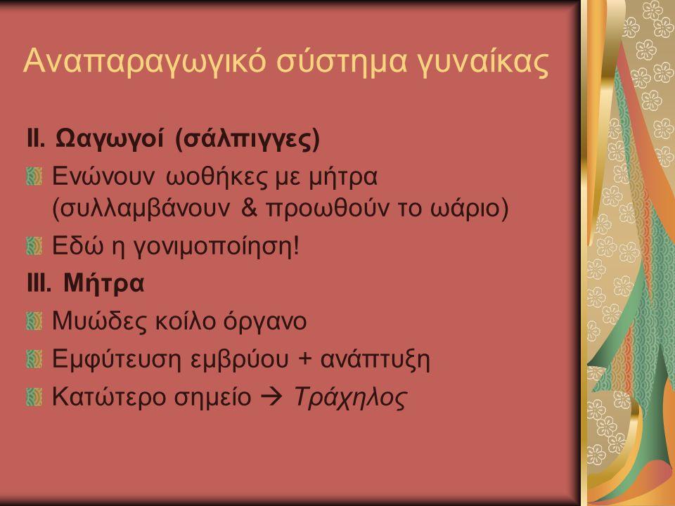 Αναπαραγωγικό σύστημα γυναίκας II.