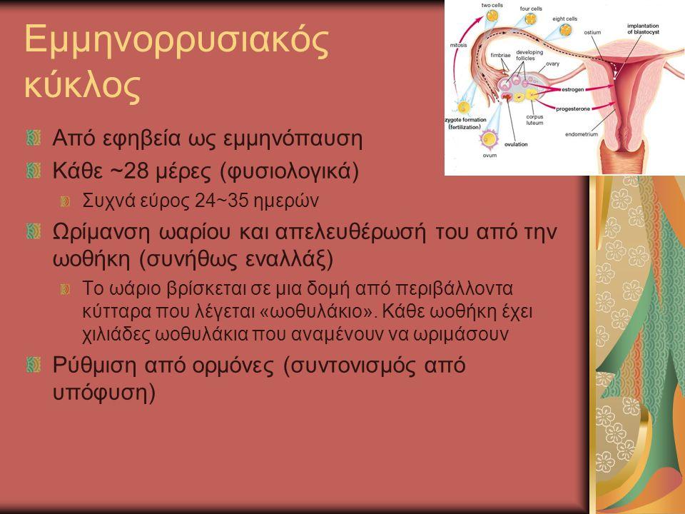 Εμμηνορρυσιακός κύκλος Από εφηβεία ως εμμηνόπαυση Κάθε ~28 μέρες (φυσιολογικά) Συχνά εύρος 24~35 ημερών Ωρίμανση ωαρίου και απελευθέρωσή του από την ωοθήκη (συνήθως εναλλάξ) Το ωάριο βρίσκεται σε μια δομή από περιβάλλοντα κύτταρα που λέγεται «ωοθυλάκιο».