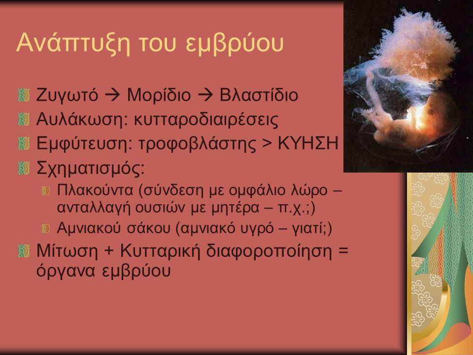 Ανάπτυξη του εμβρύου Ζυγωτό  Μορίδιο  Βλαστίδιο Αυλάκωση: κυτταροδιαιρέσεις Εμφύτευση: τροφοβλάστης > ΚΥΗΣΗ Σχηματισμός: Πλακούντα (σύνδεση με ομφάλιο λώρο – ανταλλαγή ουσιών με μητέρα – π.χ.;) Αμνιακού σάκου (αμνιακό υγρό – γιατί;) Μίτωση + Κυτταρική διαφοροποίηση = όργανα εμβρύου