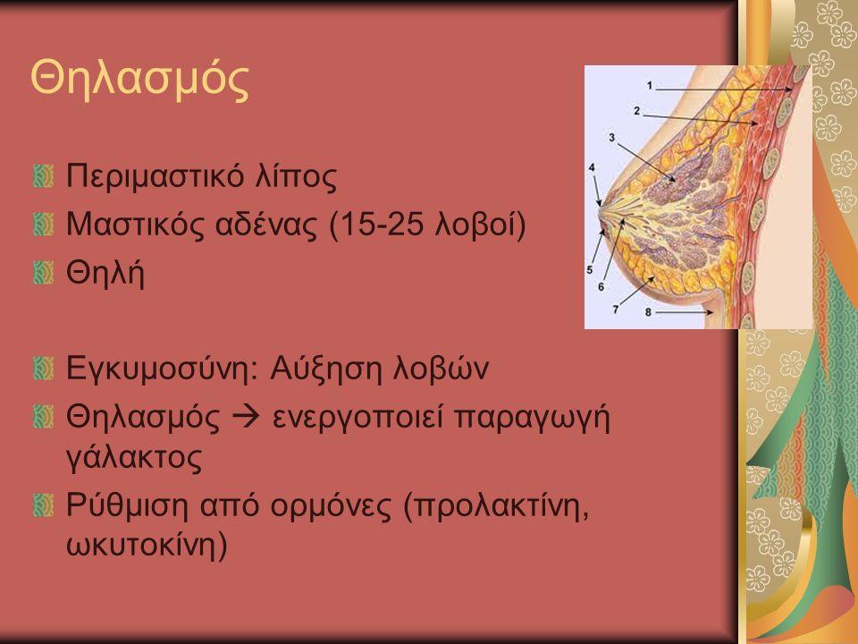 Θηλασμός Περιμαστικό λίπος Μαστικός αδένας (15-25 λοβοί) Θηλή Εγκυμοσύνη: Αύξηση λοβών Θηλασμός  ενεργοποιεί παραγωγή γάλακτος Ρύθμιση από ορμόνες (προλακτίνη, ωκυτοκίνη)