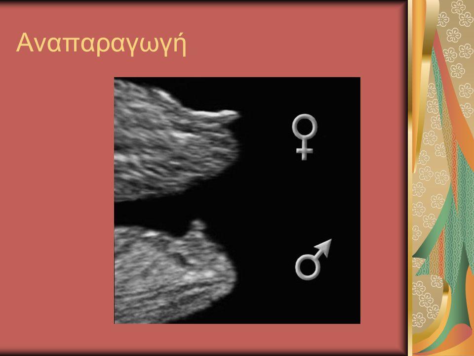 Στειρότητα ♂: Αδυναμία σπερματοζωαρίων Αριθμού Μορφολογίας – κινητικότητας Περιβαλλοντικοί λόγοι, ασθένειες ♀:♀: Ανεπάρκεια ωαρίων Απόφραξη σαλπίγγων Διορθωτικές επεμβάσεις Εξωσωματική γονιμοποίηση