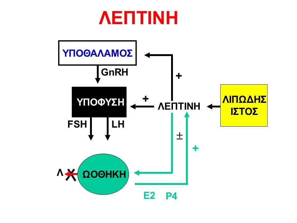 ΥΠΟΘΑΛΑΜΟΣ ΥΠΟΦΥΣΗ ΩΟΘΗΚΗ GnRH + Λ E2 P4 FSHLH + + ΛΕΠΤΙΝΗ ΛΙΠΩΔΗΣ ΙΣΤΟΣ  ΛΕΠΤΙΝΗ