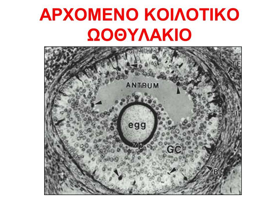 ΑΡΧΟΜΕΝΟ ΚΟΙΛΟΤΙΚΟ ΩΟΘΥΛΑΚΙΟ