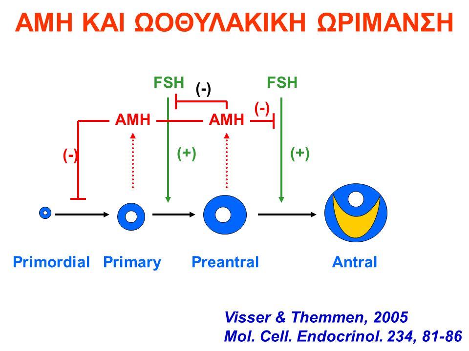 AMH FSH (-) (+) Primordial Primary Preantral Antral AMH ΚΑΙ ΩΟΘΥΛΑΚΙΚΗ ΩΡΙΜΑΝΣΗ Visser & Themmen, 2005 Mol.