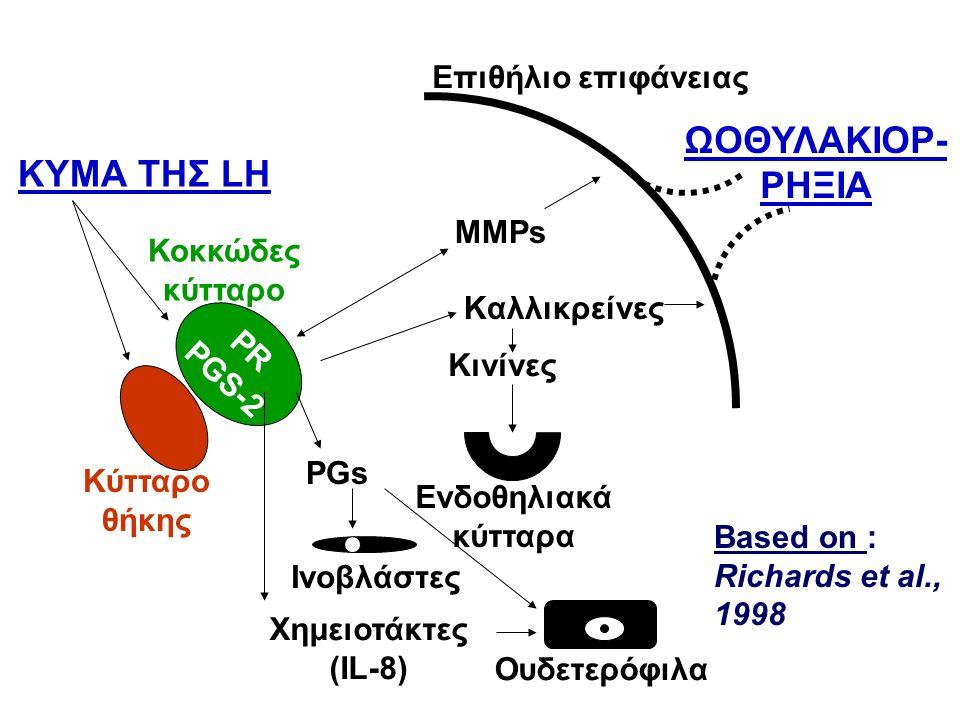 PGs PR PGS-2 ΚΥΜΑ ΤΗΣ LH MMPs Kαλλικρείνες Kινίνες Ενδοθηλιακά κύτταρα Ινοβλάστες Ουδετερόφιλα Χημειοτάκτες (IL-8) Επιθήλιο επιφάνειας ΩΟΘΥΛΑΚΙΟΡ- ΡΗΞΙΑ Κύτταρο θήκης Κοκκώδες κύτταρο Based on : Richards et al., 1998
