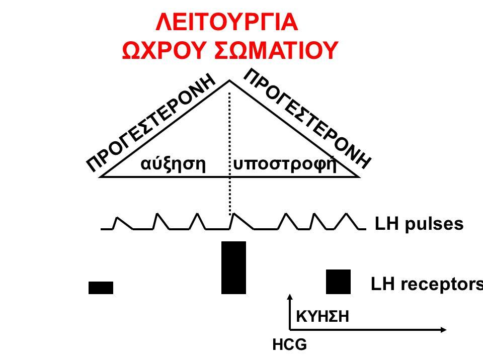 αύξηση υποστροφή ΠΡΟΓΕΣΤΕΡΟΝΗ LH pulses LH receptors ΛΕΙΤΟΥΡΓΙΑ ΩΧΡΟΥ ΣΩΜΑΤΙΟΥ ΚΥΗΣΗ HCG