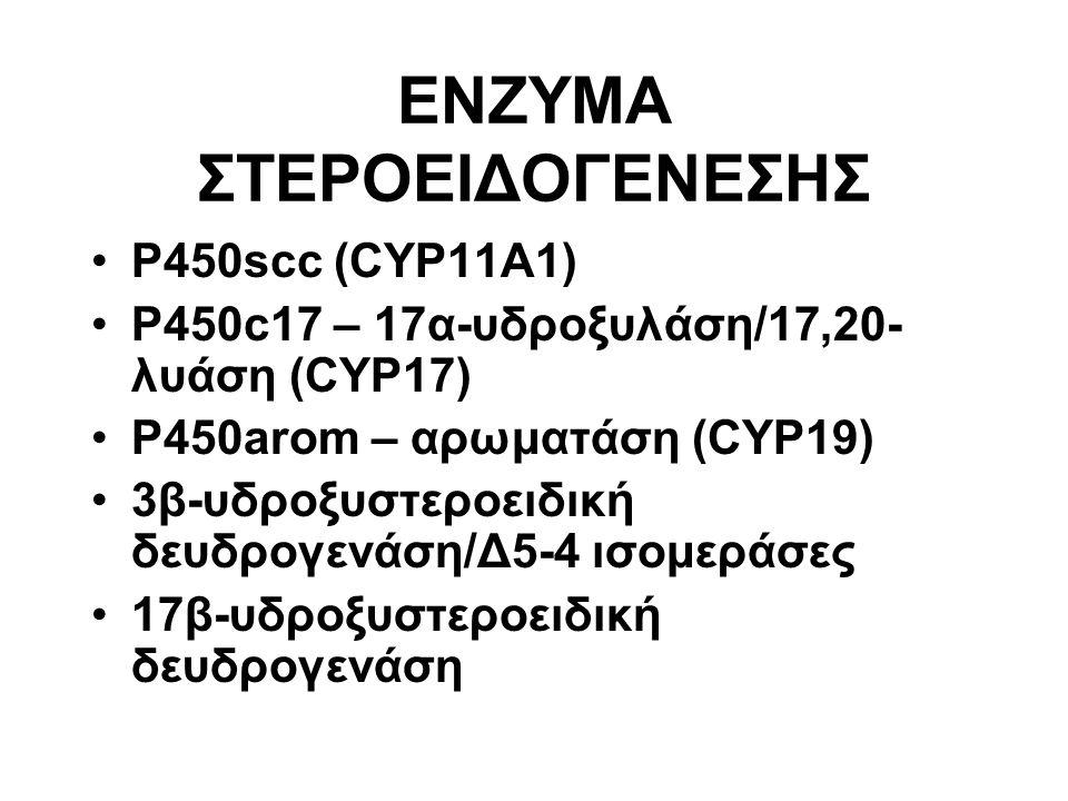 P450scc (CYP11A1) P450c17 – 17α-υδροξυλάση/17,20- λυάση (CYP17) P450arom – αρωματάση (CYP19) 3β-υδροξυστεροειδική δευδρογενάση/Δ5-4 ισομεράσες 17β-υδροξυστεροειδική δευδρογενάση ENZYMA ΣΤΕΡΟΕΙΔΟΓΕΝΕΣΗΣ