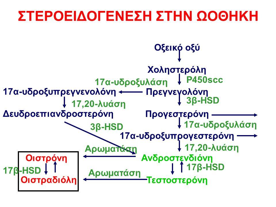 Οξεικό οξύ Χοληστερόλη Πρεγνενολόνη Προγεστερόνη 17α-υδροξυπρογεστερόνη Ανδροστενδιόνη Τεστοστερόνη 17α-υδροξυπρεγνενολόνη Δευδροεπιανδροστερόνη Οιστρόνη Οιστραδιόλη ΣΤΕΡΟΕΙΔΟΓΕΝΕΣΗ ΣΤΗΝ ΩΟΘΗΚΗ P450scc 3β-HSD 17α-υδροξυλάση 17,20-λυάση 17β-HSD 17α-υδροξυλάση 17,20-λυάση 3β-HSD Αρωματάση 17β-HSD