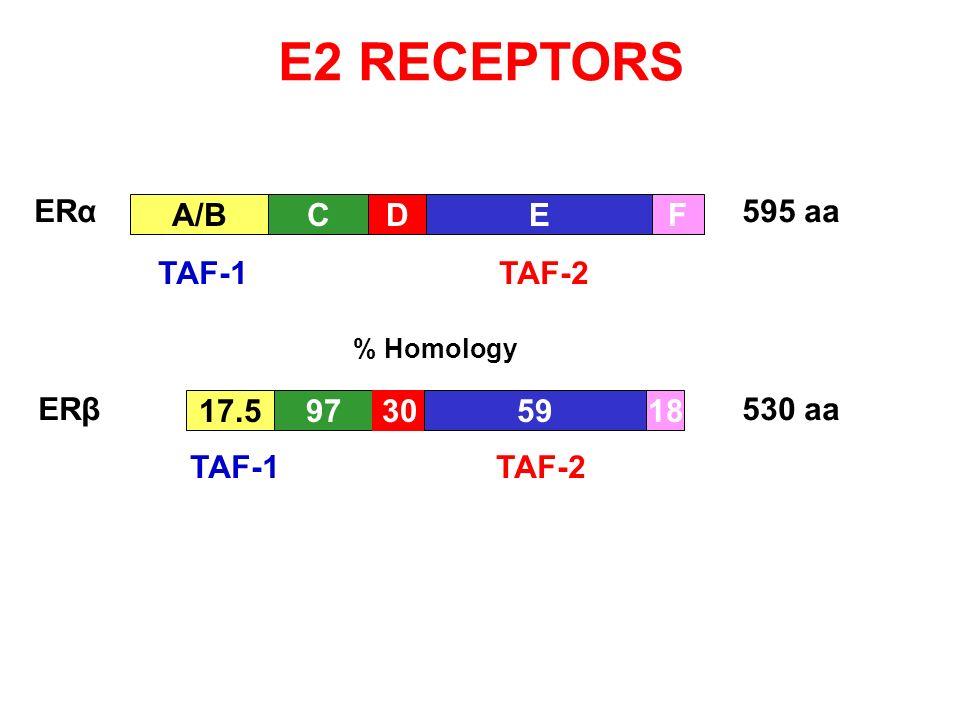 E2 RECEPTORS A/BCDE 17.597305918 F 595 aa 530 aa % Homology ERα ERβ TAF-1 TAF-2