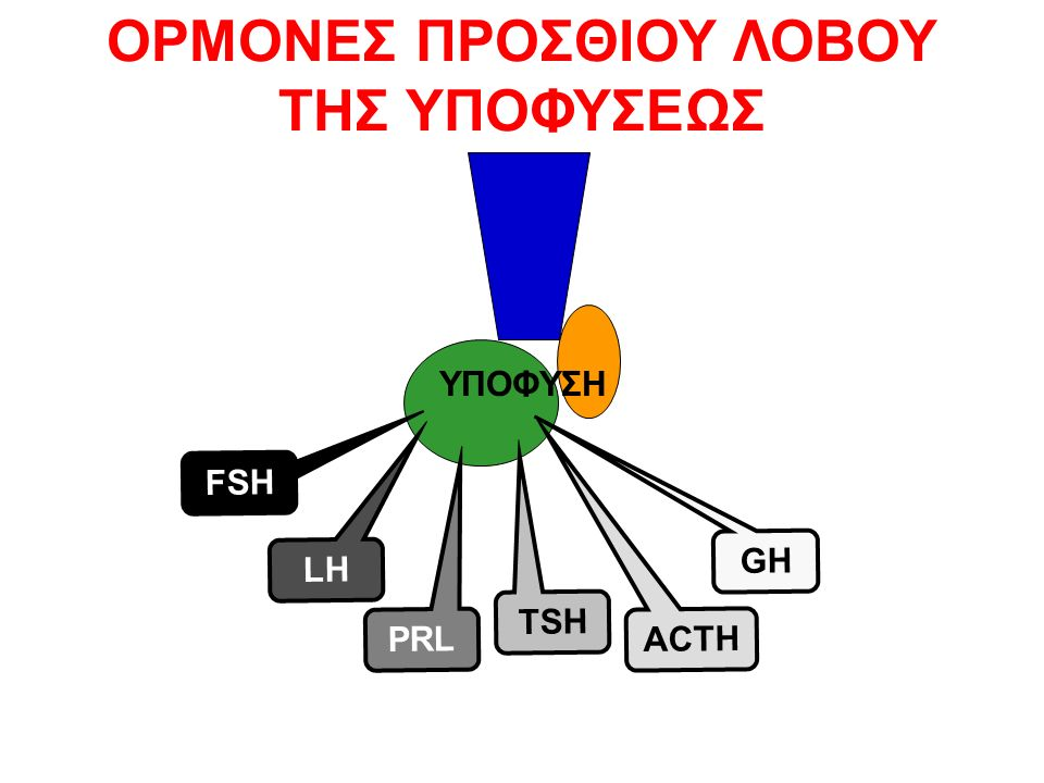 GnRH LH GnRH-BC 048 ΗΜΕΡΕΣ UP REGULATION
