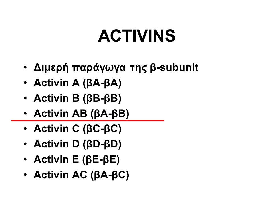 Διμερή παράγωγα της β-subunit Activin A (βΑ-βΑ) Activin B (βΒ-βΒ) Activin AB (βΑ-βΒ) Αctivin C (βC-βC) Activin D (βD-βD) Activin E (βΕ-βΕ) Activin AC (βΑ-βC) ACTIVINS