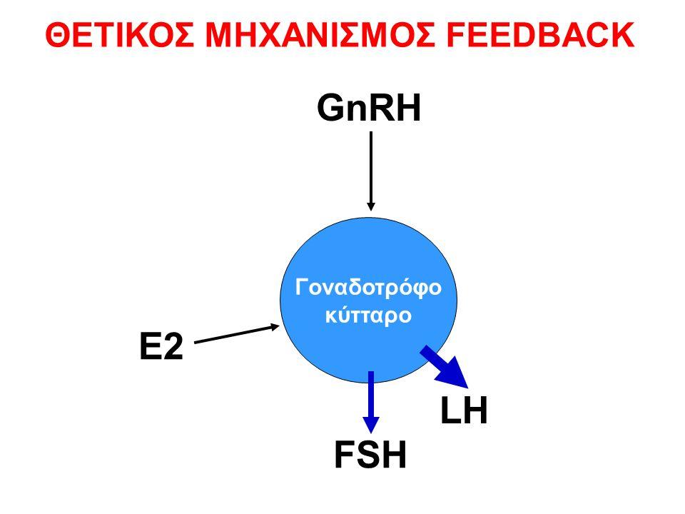 Γοναδοτρόφο κύτταρο FSH LH GnRH E2 ΘΕΤΙΚΟΣ ΜΗΧΑΝΙΣΜΟΣ FEEDBACK