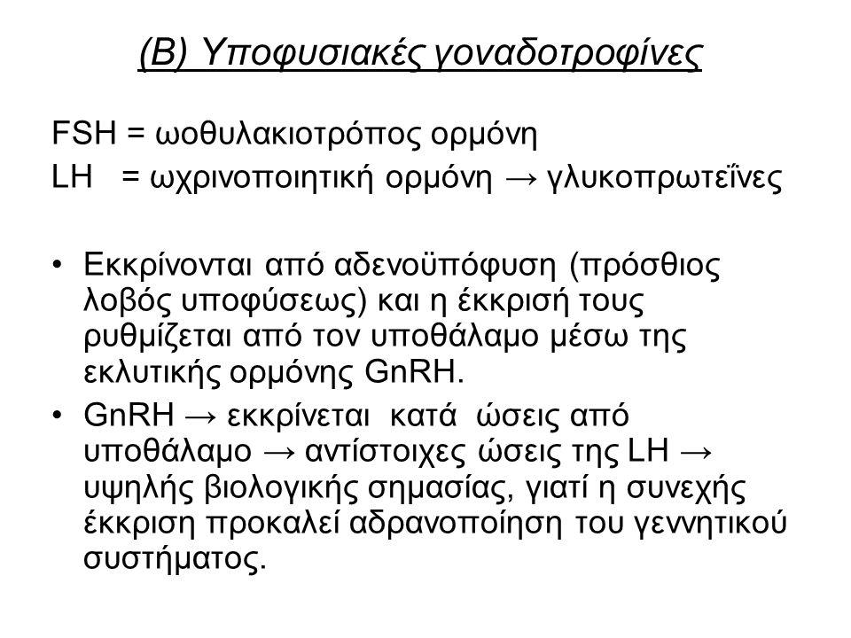 (Β) Υποφυσιακές γοναδοτροφίνες FSH = ωοθυλακιοτρόπος ορμόνη LH = ωχρινοποιητική ορμόνη → γλυκοπρωτεΐνες Εκκρίνονται από αδενοϋπόφυση (πρόσθιος λοβός υποφύσεως) και η έκκρισή τους ρυθμίζεται από τον υποθάλαμο μέσω της εκλυτικής ορμόνης GnRH.