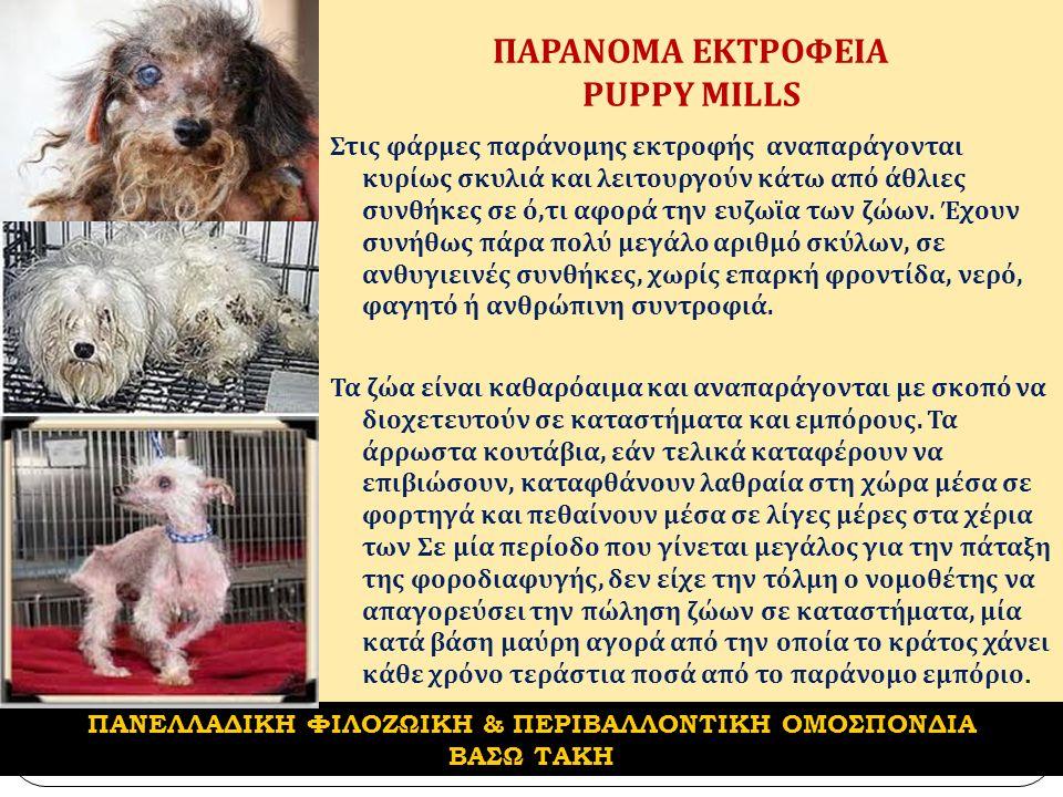 ΠΑΡΑΝΟΜΑ ΕΚΤΡΟΦΕΙΑ PUPPY MILLS Στις φάρμες παράνομης εκτροφής αναπαράγονται κυρίως σκυλιά και λειτουργούν κάτω από άθλιες συνθήκες σε ό, τι αφορά την ευζωϊα των ζώων.