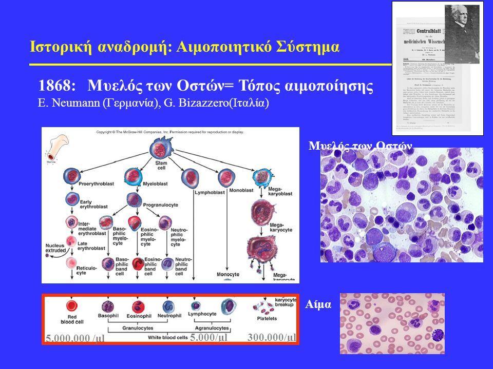 Ιστορική αναδρομή: Αιμοποιητικό Σύστημα 1868: Μυελός των Οστών= Τόπος αιμοποίησης E.