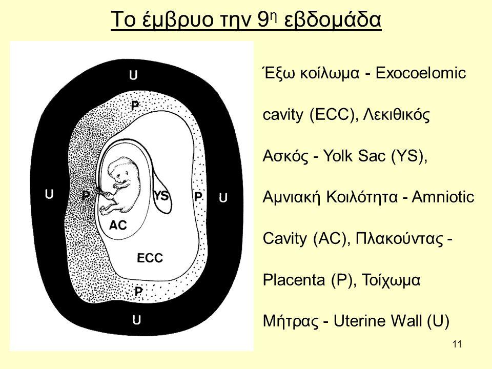 11 Το έμβρυο την 9 η εβδομάδα Έξω κοίλωμα - Exocoelomic cavity (ECC), Λεκιθικός Ασκός - Yolk Sac (YS), Αμνιακή Κοιλότητα - Amniotic Cavity (AC), Πλακούντας - Placenta (P), Τοίχωμα Μήτρας - Uterine Wall (U)