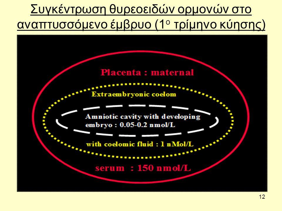 12 Συγκέντρωση θυρεοειδών ορμονών στο αναπτυσσόμενο έμβρυο (1 ο τρίμηνο κύησης)