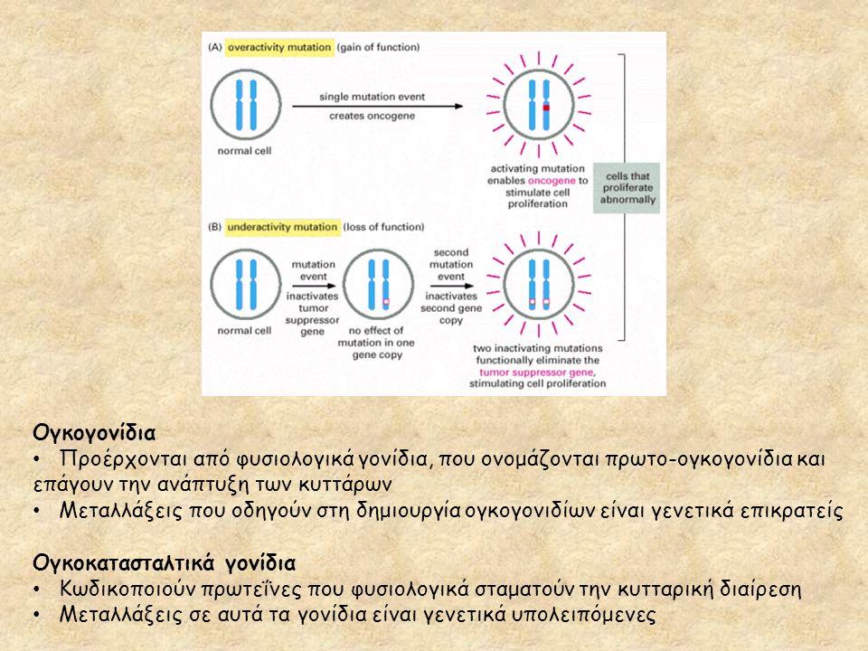 Ογκογονίδια Προέρχονται από φυσιολογικά γονίδια, που ονομάζονται πρωτο-ογκογονίδια και επάγουν την ανάπτυξη των κυττάρων Μεταλλάξεις που οδηγούν στη δ