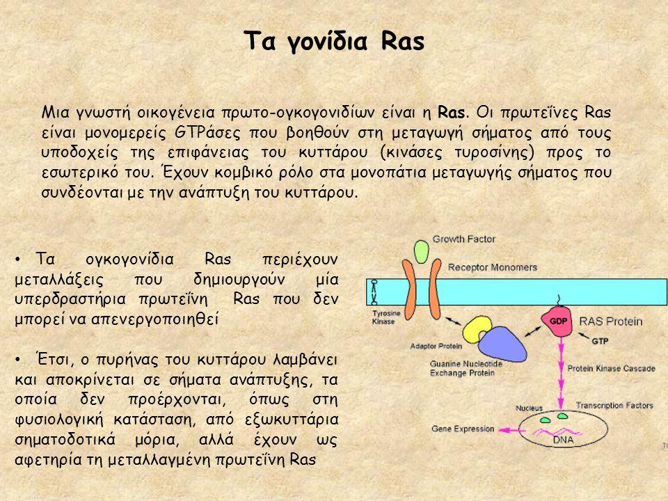 Τα γονίδια Ras Μια γνωστή οικογένεια πρωτο-ογκογονιδίων είναι η Ras. Οι πρωτεΐνες Ras είναι μονομερείς GTPάσες που βοηθούν στη μεταγωγή σήματος από το