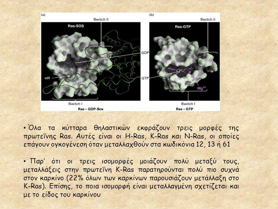 Όλα τα κύτταρα θηλαστικών εκφράζουν τρεις μορφές της πρωτεΐνης Ras. Αυτές είναι οι H-Ras, K-Ras και N-Ras, οι οποίες επάγουν ογκογένεση όταν μεταλλαχθ