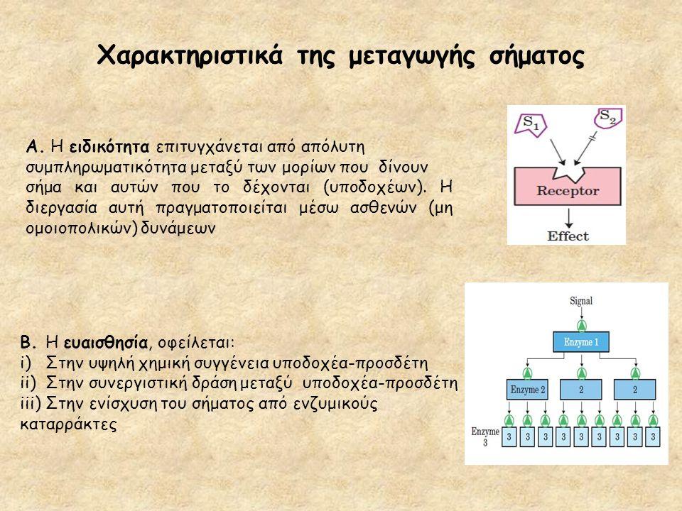 Χαρακτηριστικά της μεταγωγής σήματος Β. Η ευαισθησία, οφείλεται: i)Στην υψηλή χημική συγγένεια υποδοχέα-προσδέτη ii)Στην συνεργιστική δράση μεταξύ υπο