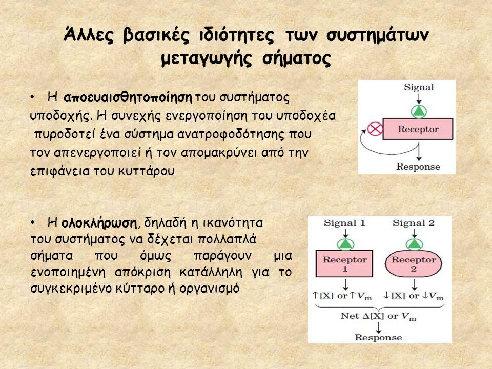 Άλλες βασικές ιδιότητες των συστημάτων μεταγωγής σήματος Η αποευαισθητοποίηση του συστήματος υποδοχής. Η συνεχής ενεργοποίηση του υποδοχέα πυροδοτεί έ