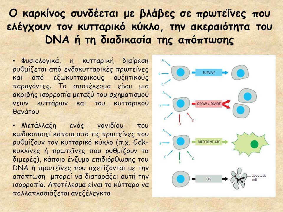 Ο καρκίνος συνδέεται με βλάβες σε πρωτεΐνες που ελέγχουν τον κυτταρικό κύκλο, την ακεραιότητα του DNA ή τη διαδικασία της απόπτωσης Φυσιολογικά, η κυτ