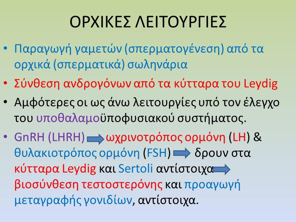 ΙΣΤΟΛΟΓΙΑ ΟΡΧΙΚΩΝ-ΣΠΕΡΜΑΤΙΚΩΝ ΣΩΛΗΝΑΡΙΩΝ