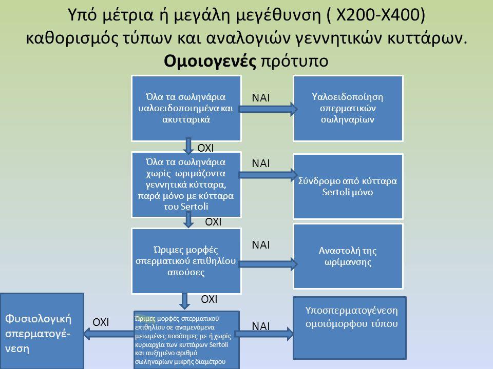 Υπό μέτρια ή μεγάλη μεγέθυνση ( Χ200-Χ400) καθορισμός τύπων και αναλογιών γεννητικών κυττάρων. Ομοιογενές πρότυπο Όλα τα σωληνάρια υαλοειδοποιημένα κα