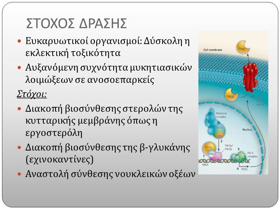 ΣΤΟΧΟΣ ΔΡΑΣΗΣ Ευκαρυωτικοί οργανισμοί : Δύσκολη η εκλεκτική τοξικότητα Αυξανόμενη συχνότητα μυκητιασικών λοιμώξεων σε ανοσοεπαρκείς Στόχοι : Διακοπή βιοσύνθεσης στερολών της κυτταρικής μεμβράνης όπως η εργοστερόλη Διακοπή βιοσύνθεσης της β - γλυκάνης ( εχινοκαντίνες ) Αναστολή σύνθεσης νουκλεικών οξέων