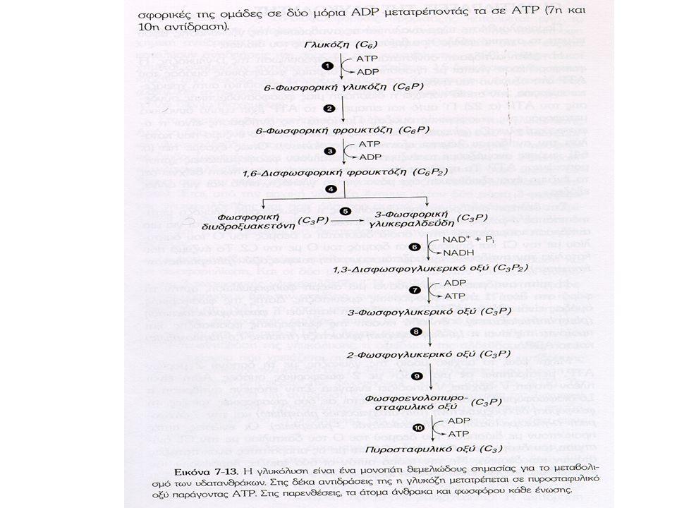 Παραγωγή γαλακτικού οξέος Αναερόβιες προσπάθειες ΝΑDH από 6η αντίδραση.