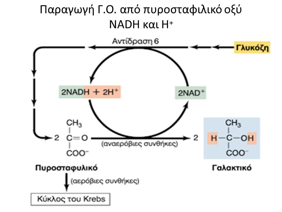 Σύνδεση γλυκόλυσης και κύκλου του Kreb's Πέρασμα Πυροσταφιλικού οξέος από το κυτταρόπλασμα στο εσωτερικό των μιτοχονδρίων μέσω του συνενζύμου Α Π.Ο.