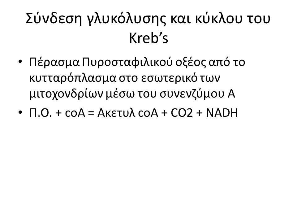 Δημιουργία Ακετυλοσυνένζυμου Α από πυροσταφιλικό οξύ (CO2-NADH)