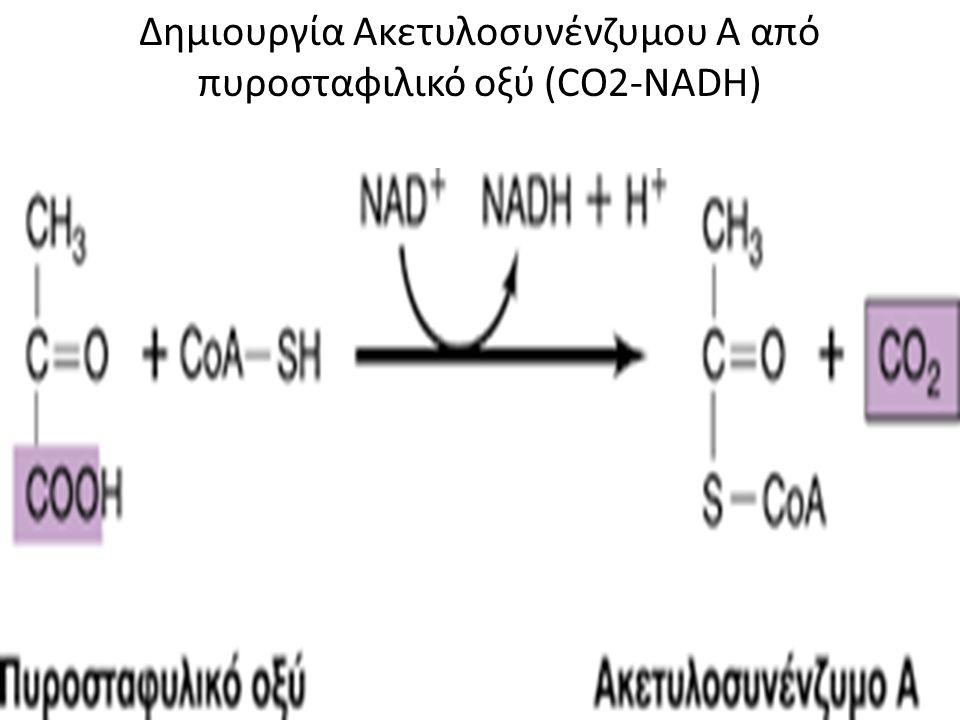 Κύκλος του Kreb's 9 συνολικά αντιδράσεις κατά τις οποίες παράγονται 3 NADH, 1 FADH2 και 1 GTP Ακετυλ coA + οξαλοξικό οξύ =* κιτρικό οξύ * συνθάση του κιτρικού οξέος.