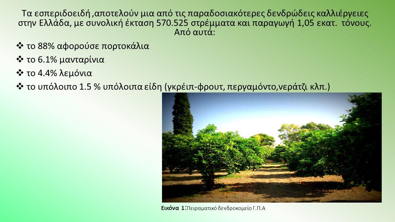 Συλλέγονταν από 5 δέντρα κάθε ποικιλίας 5 νεαροί βλαστοί ανά δένδρο (συνολικά 25 βλαστοί ανά ποικιλία) και μεταφέρονταν μέσα σε ατομικές σακούλες δειγματοληψίας στο εργαστήριο Εικόνα 4,5 : Συστροφή φύλλων παρουσία αφίδων (αριστερά), αφίδες σε φύλλο πορτοκαλιάς (δεξιά), αφίδες σε φύλλο πορτοκαλιάς (κάτω)