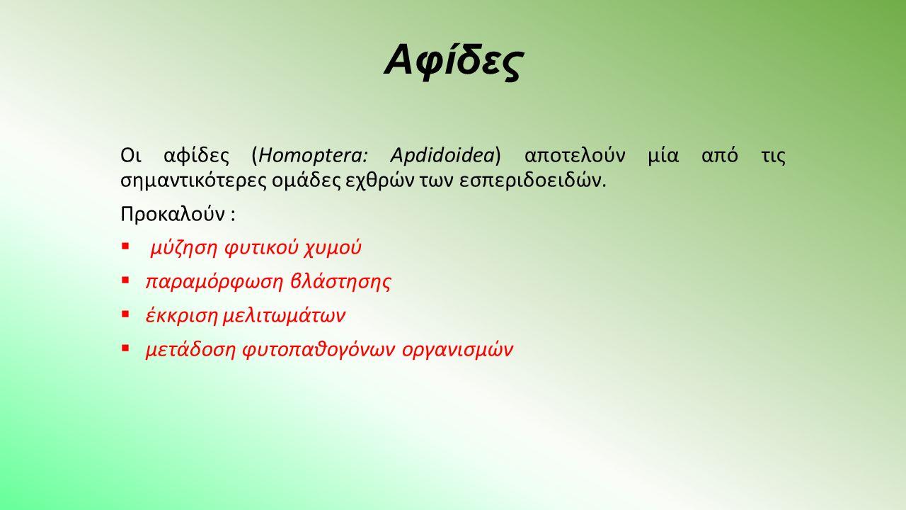 Αφίδες Οι αφίδες (Homoptera: Apdidoidea) αποτελούν μία από τις σημαντικότερες ομάδες εχθρών των εσπεριδοειδών.